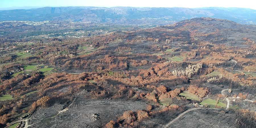 forest-fires-in-portugal-wildfires-reforestation-project