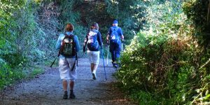walkers-forest-camino-de-santiago-caminoways