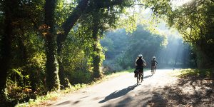 cycling-the-camino-forest-vigo-caminoways