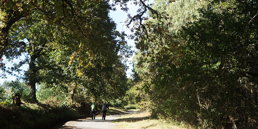forest-pilgrims-two-on-the-camino-de-santiago-caminoways