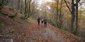 Amazing Hiking Trails