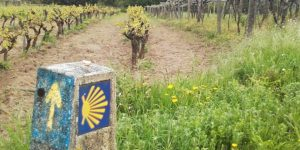 rias-baixes-vineyards-portuguese-coastal-mindful-walking-caminoways