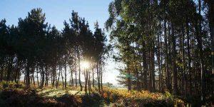 forest-camino-de-santiago-camino-ingles-caminoways