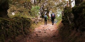 pilgrims-forest-camino-de-santiago-winter-tips-caminoways