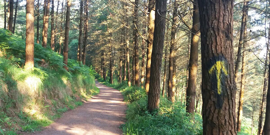 forest-walk-the-camino-de-santiago-caminoways