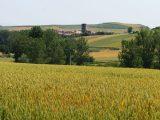 fields-camino-de-santiago-logrono-burgos-caminoways-camino-from-logrono