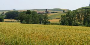 Camino from Logrono