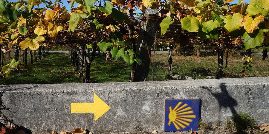 Vineyards-autumn-camino-ways-camino-portugues