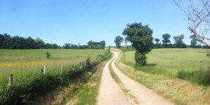 walking-trail-arles-way-camino-routes-caminoways