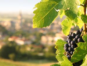 Grape-wine-caminoways
