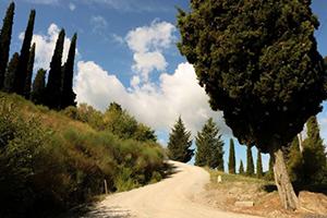 I-volti-della-via-francigena-Fabio-Italy