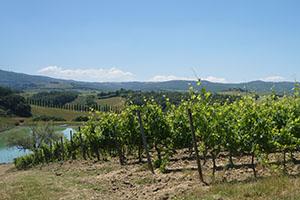 Lucca-to-Siena-Tuscany-FrancigenaWays