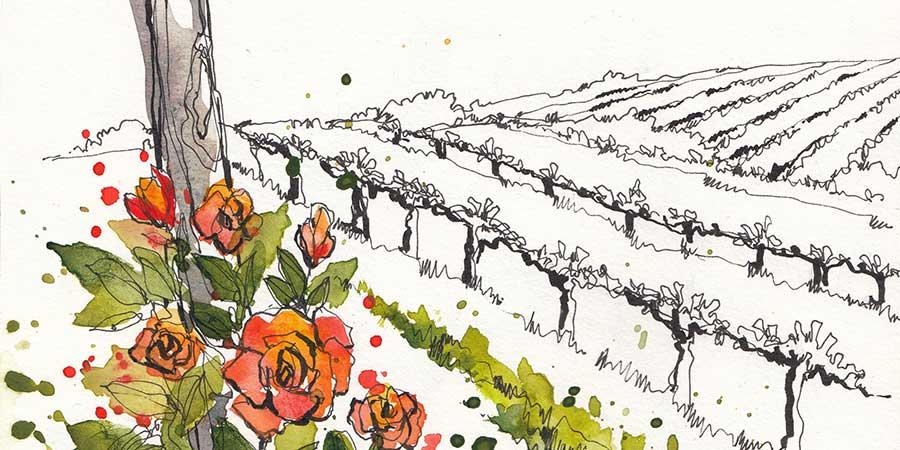 Tuscan-vineyards-camino-to-rome-caminoways