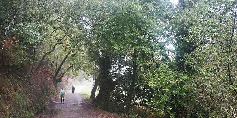 el-camino-portugues-dia-lluvioso-elizabeth-caminoways