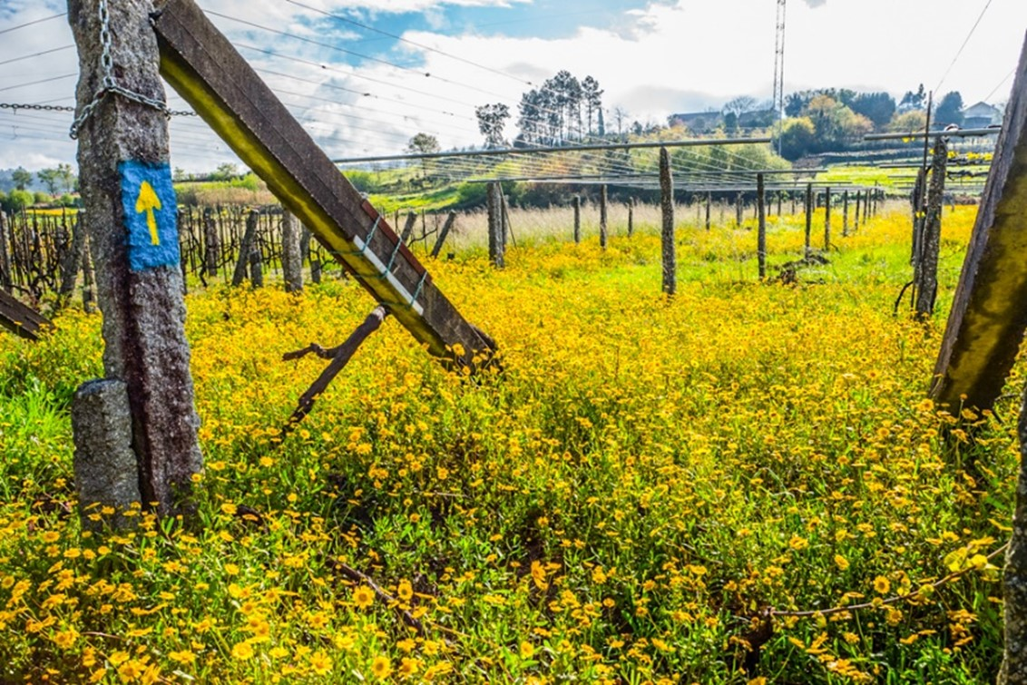 Photographing The Camino Flowers