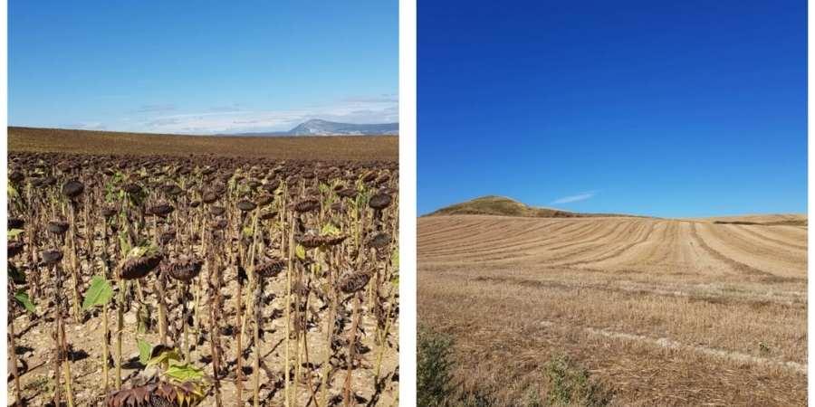 Spanish-countryside-along-camino-caminoways.com