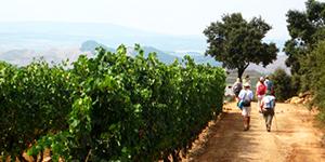 camino-de-santiago-guided-tour-caminoways