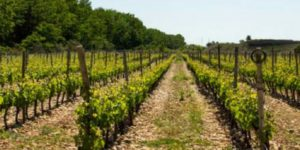 competition-win-a-wine-tour-with-caminoways