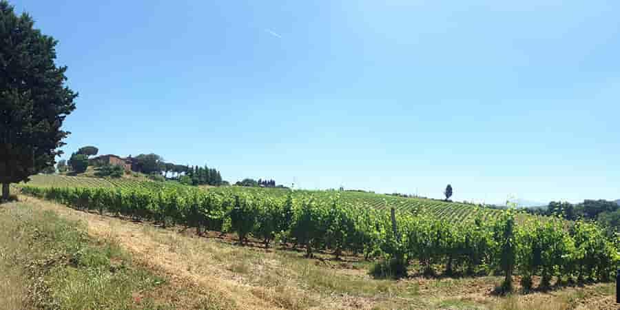 tuscany-vineyards-via-francigena-caminoways