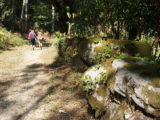 forest-camino-portugues-caminoways