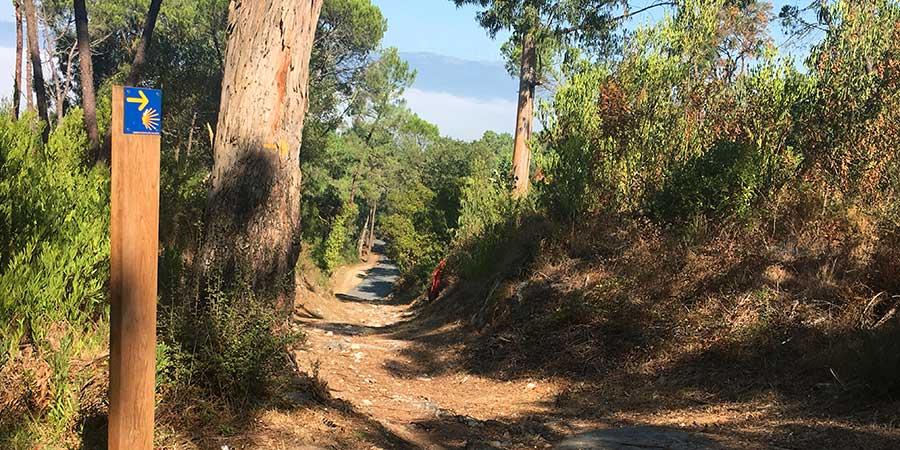 mindful walking camino-trail-porto-baiona