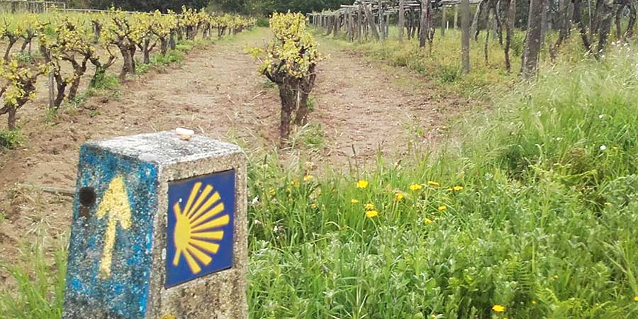 rias-baixes-vineyards-portuguese-coastal-mindful-walking-caminoways