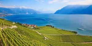 Lake-Geneva-vineyards-Switzerland-Via-Francigena-camino-Francigena-ways-638x359