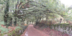 we cycled the camino frances woodland