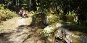 pilgrims-forest-camino-portugues-caminoways