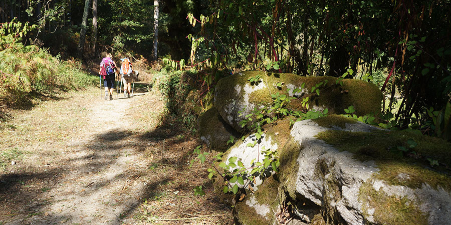 pilgrims-forest-camino-portugues-caminoways