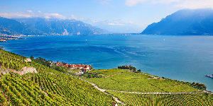 vevey-vinyeards-lake-geneva-caminoways