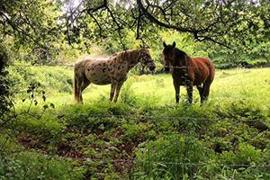 horses-camino-de-santiago-lili