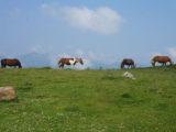 horses-pyrenees-ruta-napoleon-french-way-camino-de-santiago-caminoways