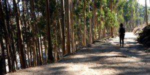 ramblers-walk-magazine-competition-caminoways-camino-de-santiago