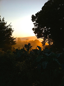 sunrise-camino-de-santiago-galicia-caminoways-2