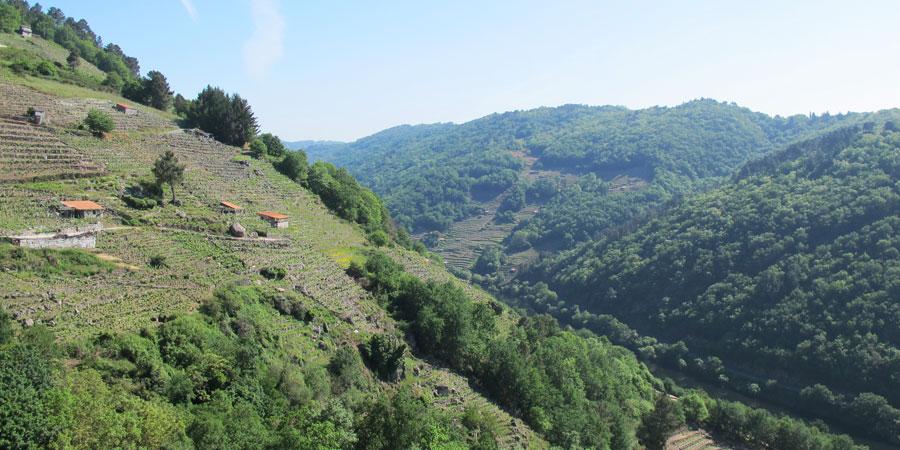 terrace-vineyards-camino-de-invierno-caminodesantiago-caminoways