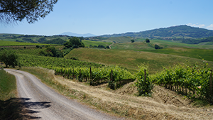 val-dorcia-vineyards-cycling-tuscany-italy-via-francigena-ways