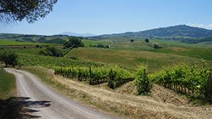 val-dorcia-vineyards-walking-tuscany-italy-via-francigena-ways