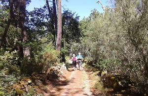 via-de-la-plata-camino-de-santiago-ourense-caminoways
