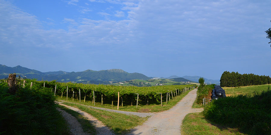 vineyard-on-the-camino-del-norte-caminoways