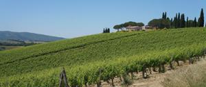 vineyards-val-dorcia-walking-tuscany-italy-via-francigena-ways