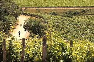 walking-Tuscany-via-francigena-pilgrims-francigenaways