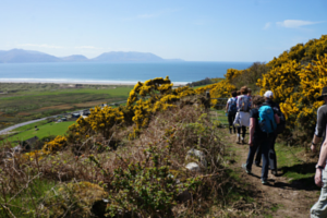 walking-kerry-camino