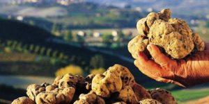 white-truffle-festivals-francigenaways